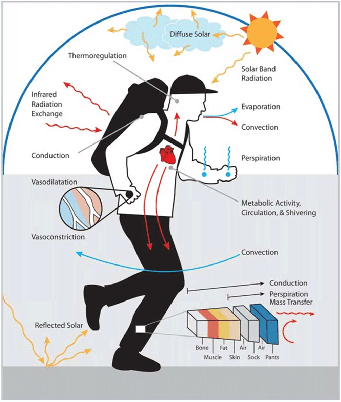 Human-thermoregulation-and-heat-transfer-mechanisms
