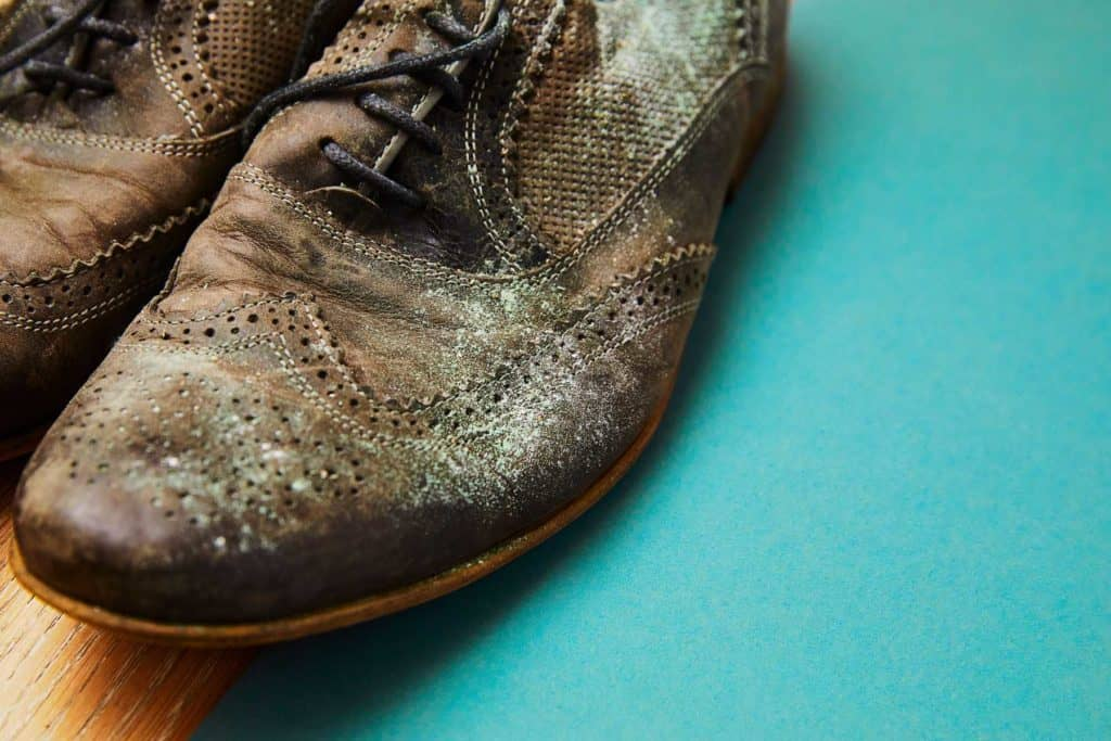 leather shoes dripped in water for long accumulated fungus and moles