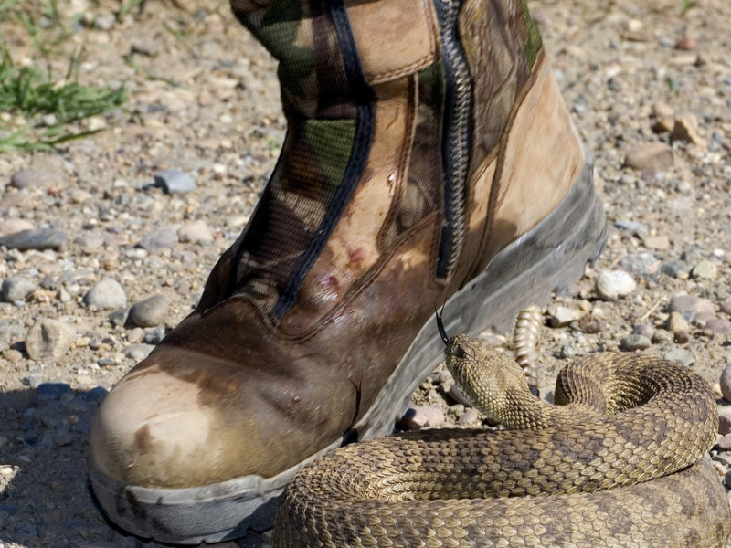Can a Copperhead Bite through Leather Work Boots